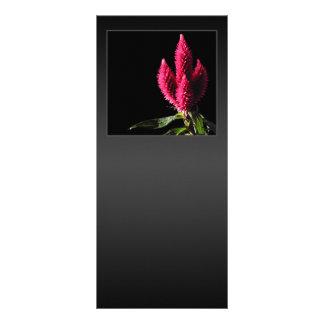 Celosia Caracas. Cockscombs. Pink Flowers. Rack Card