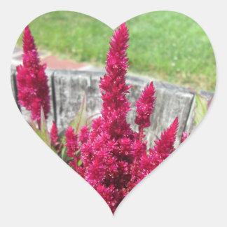 Celosia Red Rustic Fence Garden Heart Sticker