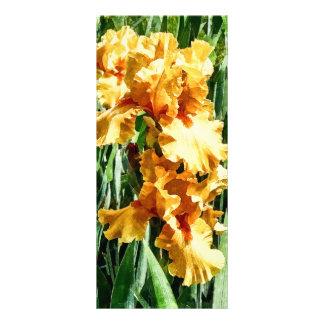 Celtic Glory Irises Rack Card