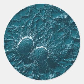 Células bacterianas del cierre del estafilococo pegatina redonda