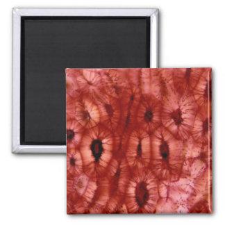 Células de Sclerenchyma de un hoyo de la cereza Imán De Frigorífico