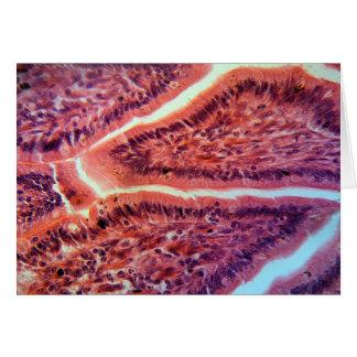 Células del intestino debajo del microscopio tarjeta de felicitación