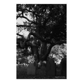 Cemetery Tree Poster