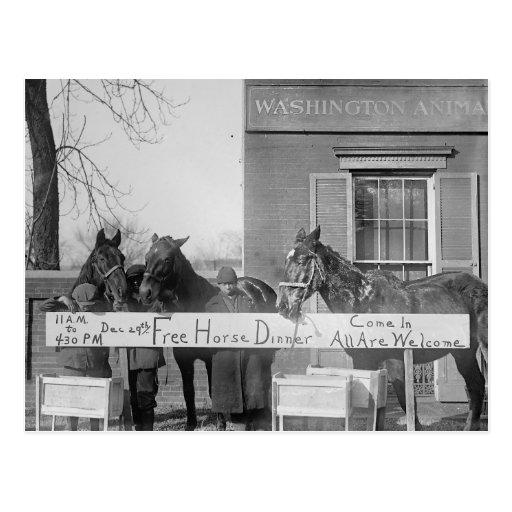 Cena libre para Horses, 1923 Postal