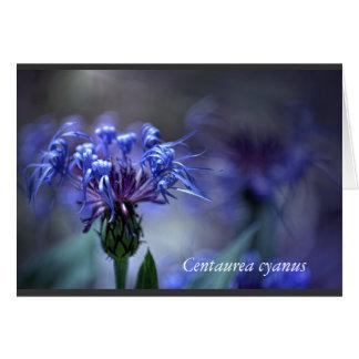 Centaurea cyanus flower - by KNairn Card