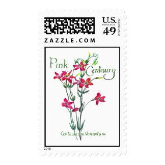 Centaury rosado botánico sello