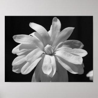 Centennial blanco y negro de la magnolia póster