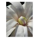 Centennial de la magnolia tarjeta postal