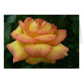 Centennial Star Rose Greeting Card