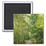 Centennial Wooded Path I Ellicott City Nature Magnet