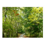 Centennial Wooded Path I Ellicott City Nature Postcard
