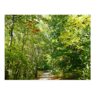 Centennial Wooded Path I Ellicott City Nature Postcard
