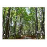 Centennial Wooded Path II Ellicott City Maryland Postcard