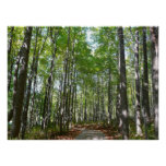 Centennial Wooded Path II Ellicott City Maryland Poster