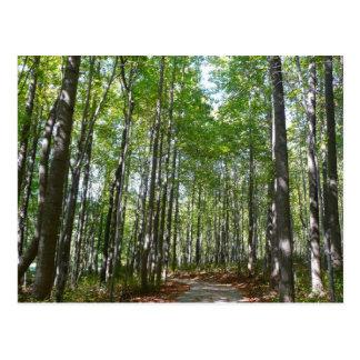 Centennial Wooded Path II Postcard