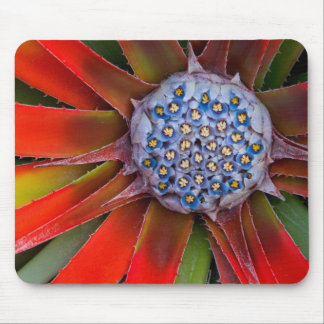 Center of a blooming agave - San Francisco Mouse Pad