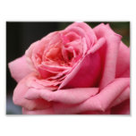 Center of a Pink Rose Photo Print