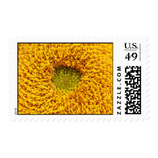Center of a sun flower stamps