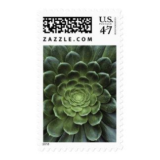 Center of Cactus Stamp