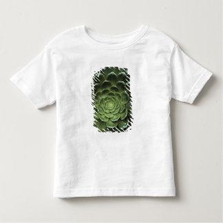 Center of Cactus Tee Shirt