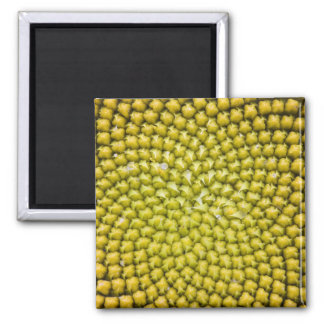 Center of giant Sunflower (Helianthus annuus) Magnet