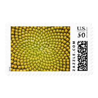 Center of giant Sunflower (Helianthus annuus) Postage