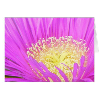 Center of Ice Plant Greeting Cards