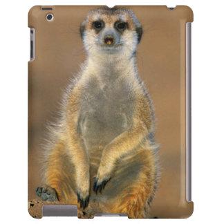 Centinela de Meerkat (Suricata Suricatta) en la Funda Para iPad