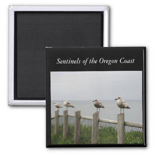 Centinelas de la gaviota del imán de la costa de O