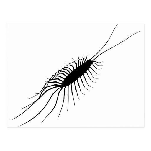 Centipede Post Card