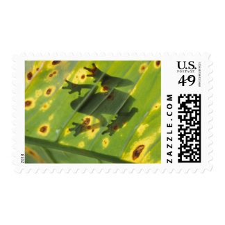 CENTRAL AMERICA, Costa Rica, Back-lit frog on Postage