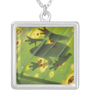 CENTRAL AMERICA, Costa Rica, Back-lit frog on Square Pendant Necklace
