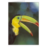Central America, Costa Rica. Keel-billed Greeting Card