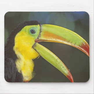 Central America, Costa Rica. Keel-billed Mouse Pad