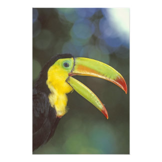 Central America, Costa Rica. Keel-billed Photo Print