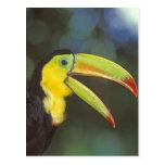 Central America, Costa Rica. Keel-billed Postcard