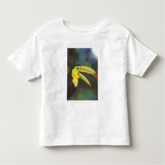Central America, Costa Rica. Keel-billed Tee Shirt