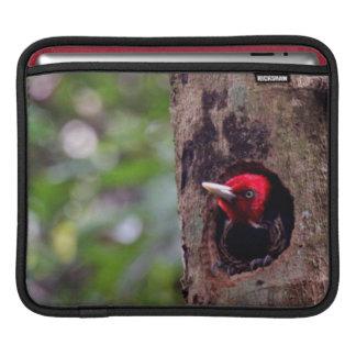 Central America, Costa Rica, Manuel Antonio iPad Sleeve