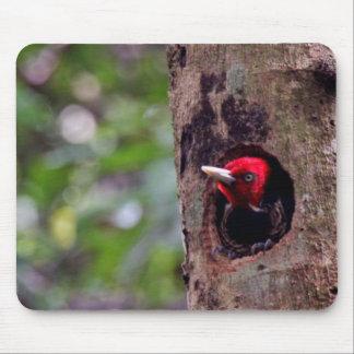 Central America, Costa Rica, Manuel Antonio Mouse Pad
