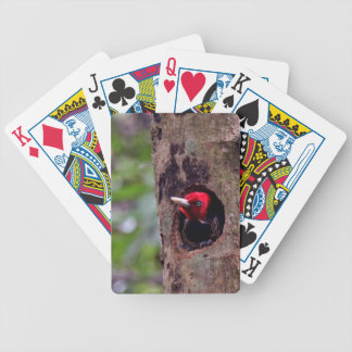 Central America, Costa Rica, Manuel Antonio Poker Deck