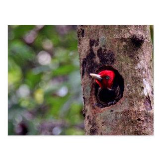 Central America, Costa Rica, Manuel Antonio Postcard