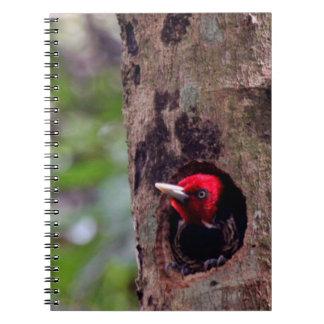Central America, Costa Rica, Manuel Antonio Spiral Notebook