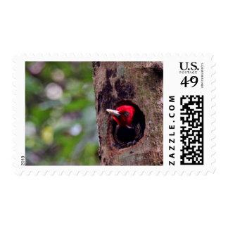 Central America, Costa Rica, Manuel Antonio Stamp