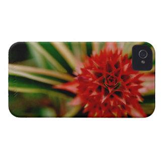 Central America, Costa Rica, San Vito, Wilson iPhone 4 Case