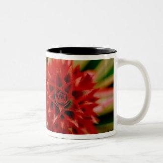 Central America, Costa Rica, San Vito, Wilson Two-Tone Coffee Mug