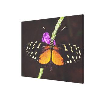 Central America, Costa Rica, Selva Verde. 3 Stretched Canvas Print