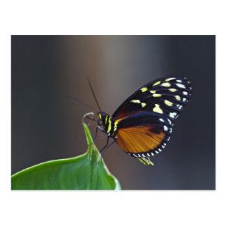 Central America, Costa Rica, Selva Verde. 3 Postcard