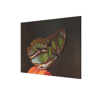 Central America, Costa Rica, Selva Verde. 4 Stretched Canvas Print