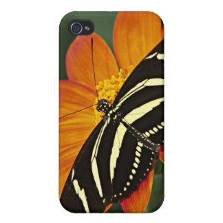 Central America, Costa Rica, Selva Verde. 4 iPhone 4/4S Case