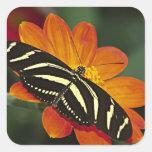 Central America, Costa Rica, Selva Verde. 4 Square Sticker